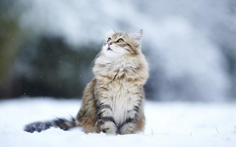 Imágenes-bonitas-de-animales-5