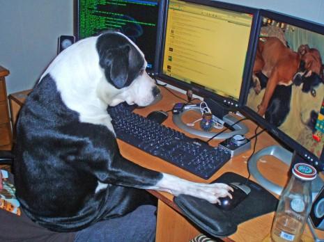 animales graciosos funny animals perros gatos y otras mascotas