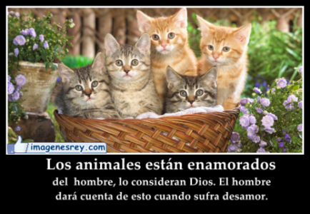 imagenes-lindas-con-frases-para-los-animales