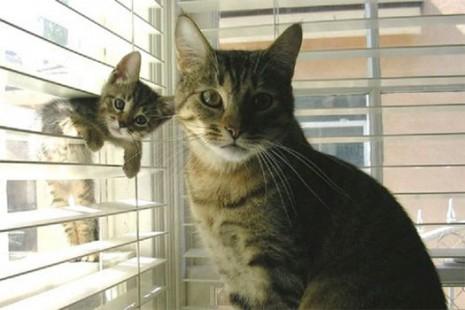 gatos-adulto-cachorro-ventana