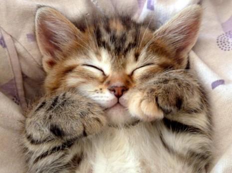 gatosmescat-cute-smile-Favim.com-643877