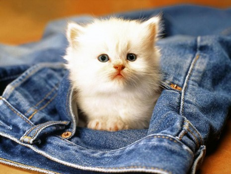 gatito.jpg1