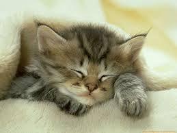 gatito.jpg2