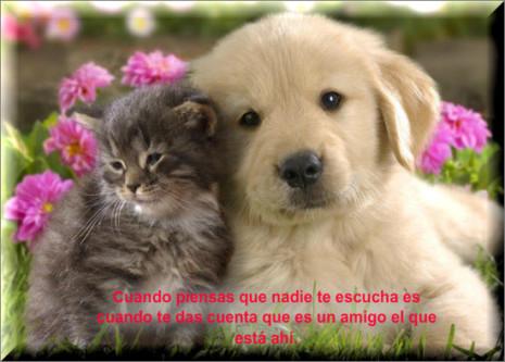 Postales-del-Dia-de-Amor-y-Amistad-13-550x394