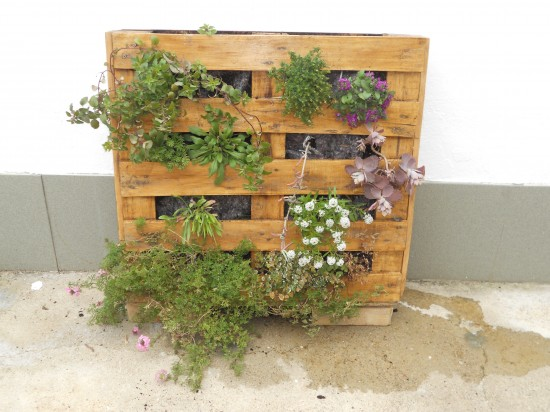 Cultivo verical con pallets