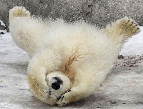 Mañana es lunes!