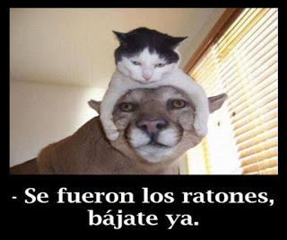Imagenes Chistosas con Animales (4)