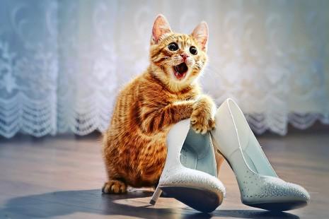 animales graciosos funny animals perros gatos y otras mascotas (19)