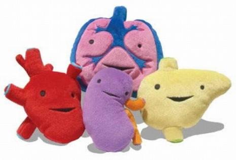 donar-organos
