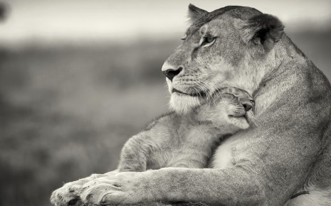 madre-cariñosa