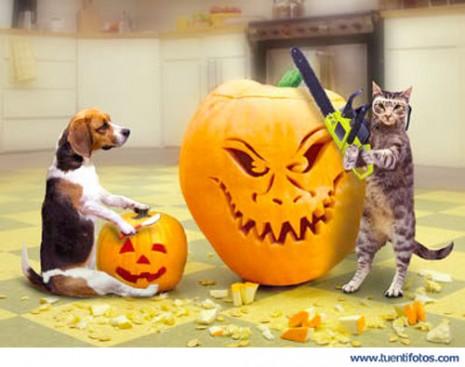 Animales_Expertos_En_Halloween