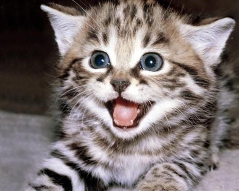 gatos-3-1024.jpg1