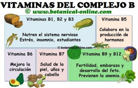 vitaminasinfo.jpg2