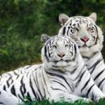 Imágenes de animales en peligro de extinción