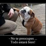 Frases graciosas con animales para el 29 de abril Día del Animal: Imágenes con mascotas