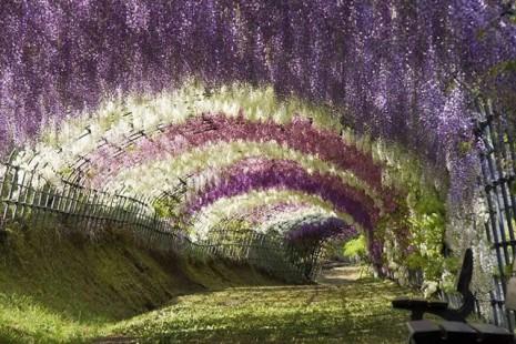 El túnel de Wsiteria en los jardines de Kawachi, en Kitakyushu Japón.