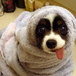 Imágenes graciosas de animales para compartir en WhatsApp del Día del animal