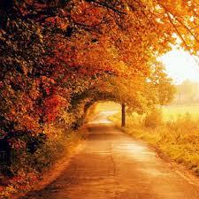 otoño.jpg4