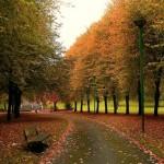 Hermosos paisajes para recibir el Otoño