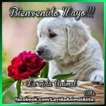 Imágenes de Bienvenido Mayo para compartir en las redes sociales