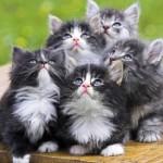 +30 Imágenes divertidas de gatitos tiernos para Fondos de Pantalla