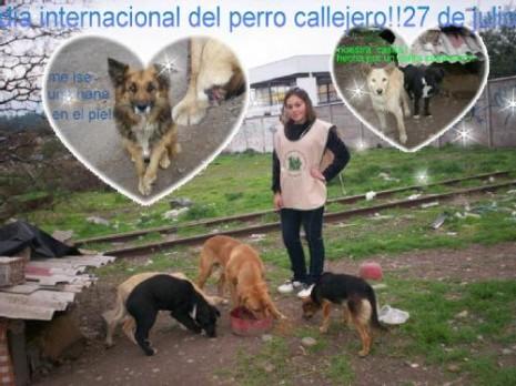 perro-callejero.jpg10