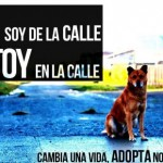Imágenes para compartir del Día Internacional del Perro Callejero: Mensajes para el 27 de julio