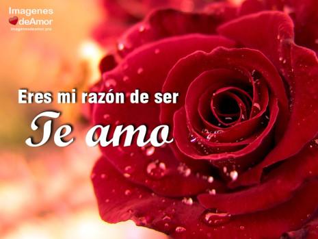 imagenes-amor-rosas-te-amo-3