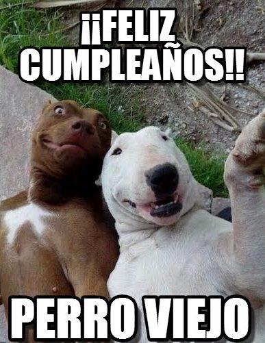 Memes De Feliz Cumpleaños Graciosos Para Whatsapp