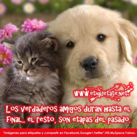 Frases Bonitas cortas de Amistad 2013 Gratis para Facebook