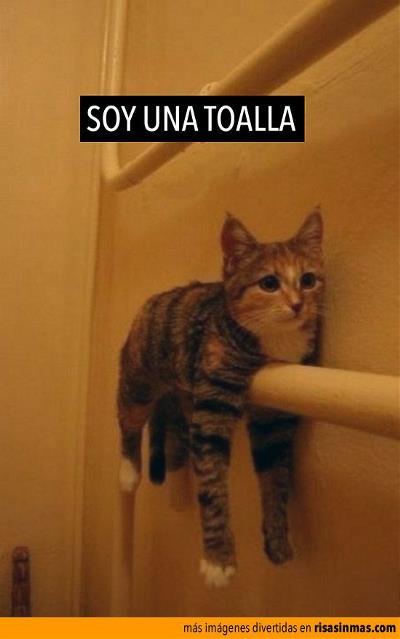 43 Imágenes De Animales Para Reír Sin Paparar