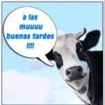 """Frases con mensajes graciosos de """"Buenas Tardes"""" en imágenes"""