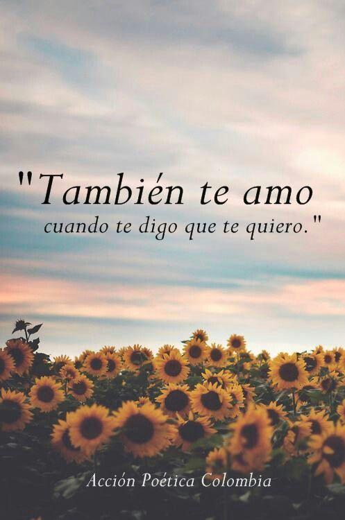 Frases Para Decir A Mi Amor Te Amo Con Imágenes